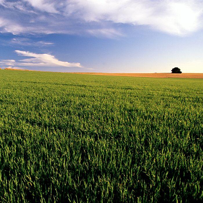 green-field-farming