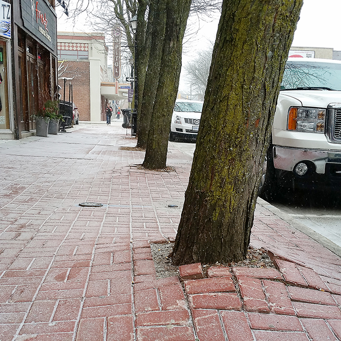 After nearly 40 years, Mother Nature is winning the fight against Chatham's downtown sidewalks, as the mature trees are pushing up the concrete, causing trip hazards. That all changes this summer, as the sidewalks throughout much of the downtown will be replaced.