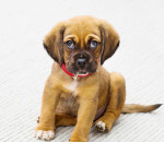 Pets such as this little puppy could benefit from Chatham-Kent getting a new animal shelter. A dinner and silent auction, Paws 4 a Cause, takes place April 28 at Countryview Golf Course in support of the shelter drive.