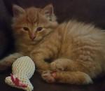 kitten finley